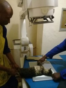 Germiston-Vet-Radiology1